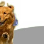 Elektronika dla psa i kota